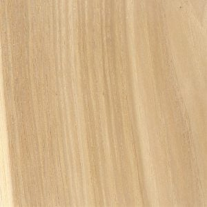 hickory wood sample